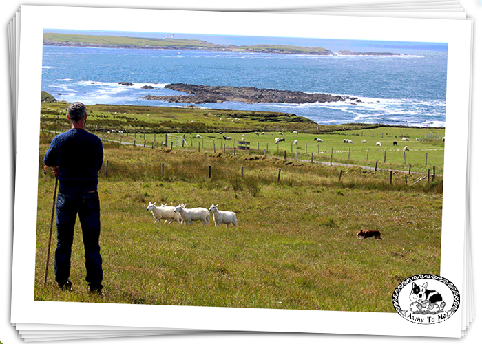 FJ looking out on Sheep herding and lighthouse