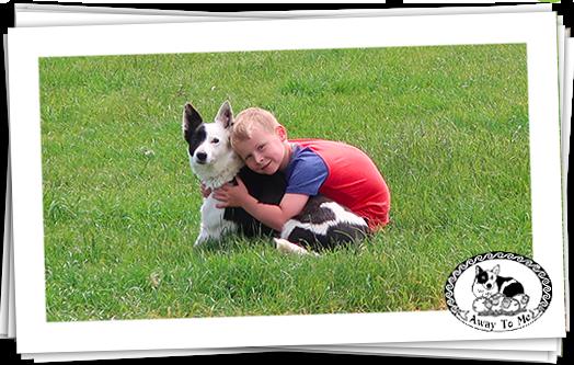 Wee boy cuddling Nell (Sheepdog)